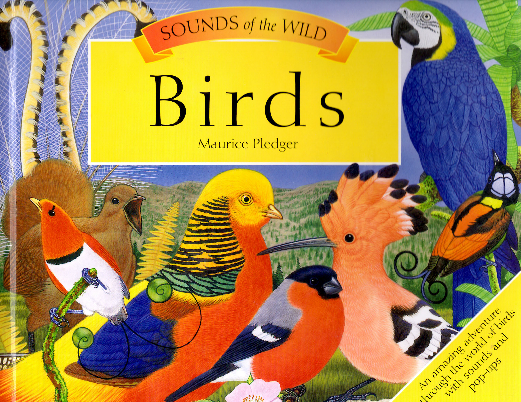 Wild Bird Sounds Children